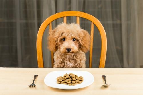 Best Dog Food For Poodle
