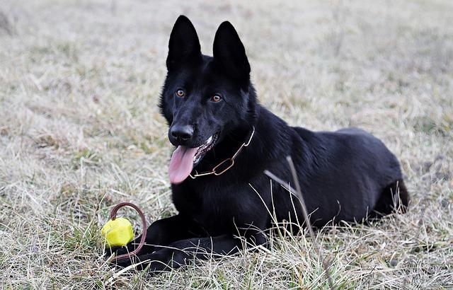 25 Hunting Dog Names Pup Junkies