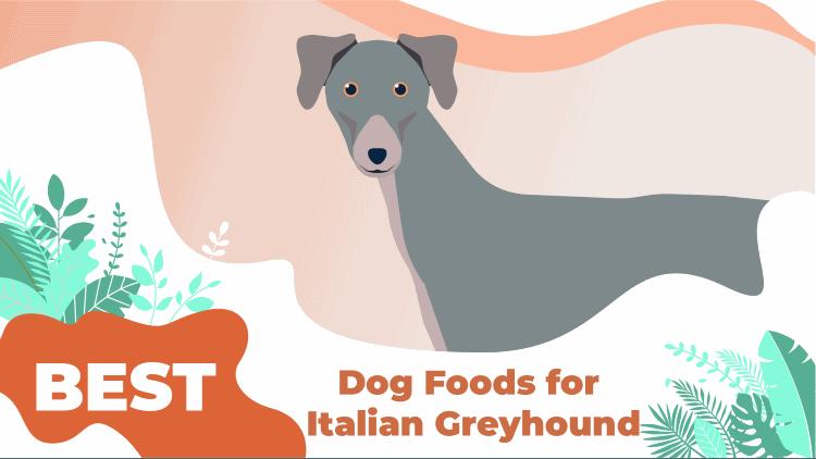 i greyhound