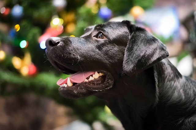 5 Best Dog Food For Labs Puppies To Seniors 2019 Reviews