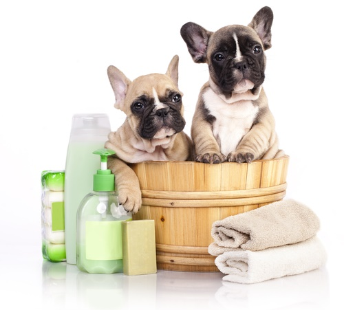 5 Best Dog Shampoos for Hair Loss In 2019 - Pup Junkies