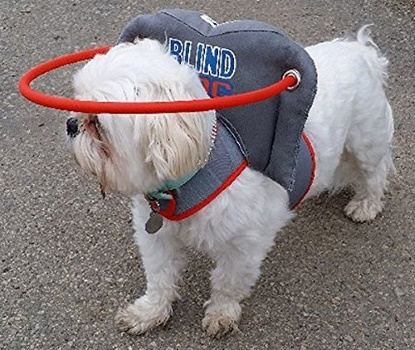 What's The Best Dog Harness for Blind Dogs in 2019 ?