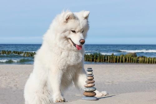 25 Spiritual And Mystical Dog Names Pup Junkies