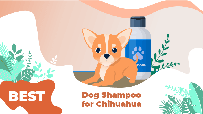 chuhuahua shampoo