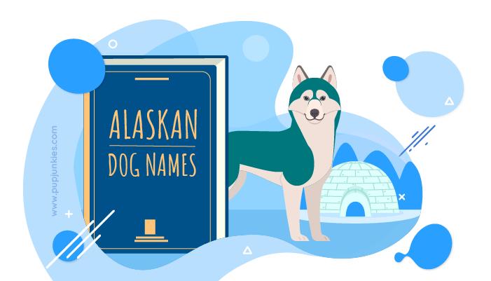 40 Most Popular Alaskan Dog Names Pup Junkies