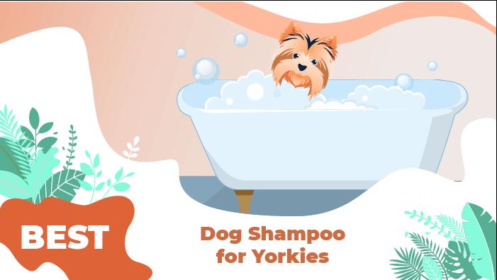 yorkies shampoo