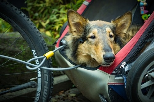 pet bike trailor