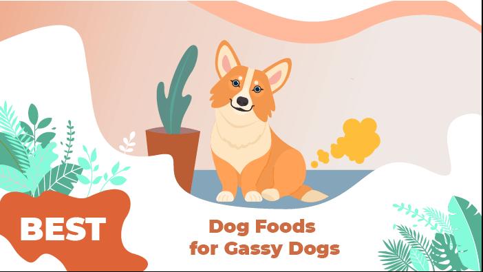 gassy dogs