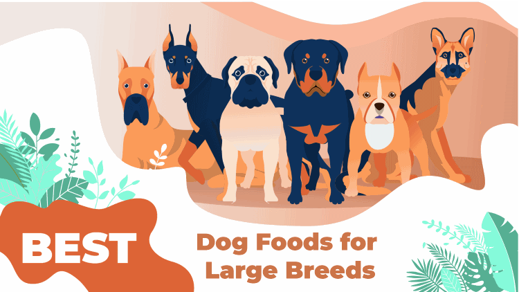 large breeds