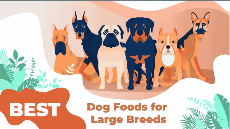 large breeds