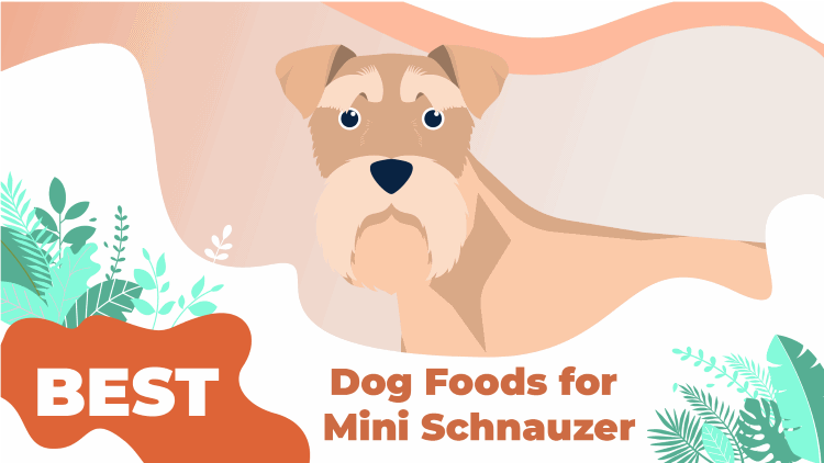 Dog Food For Miniature Schnauzers