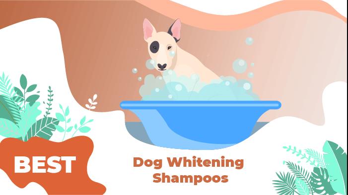 whitening shampoos