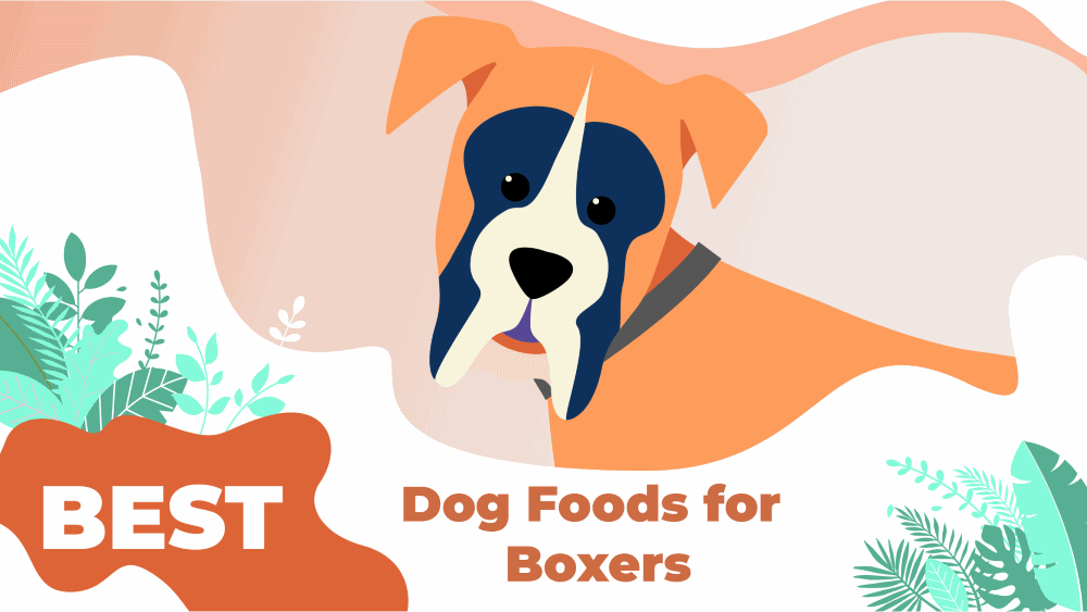 Best Dog Foods For Boxers