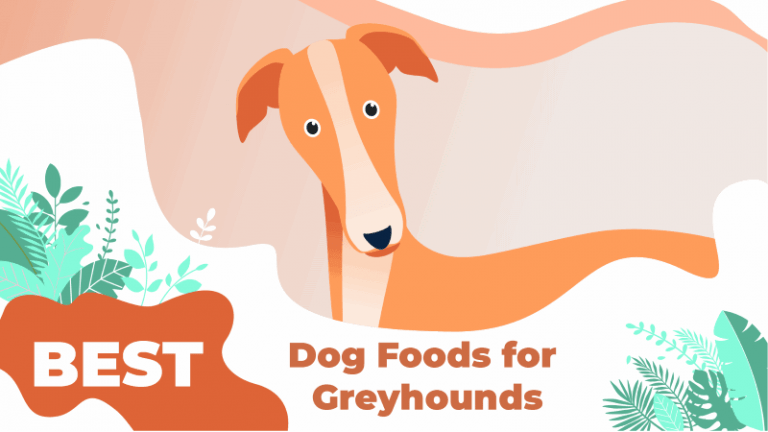 Best Dog Foods for Greyhounds