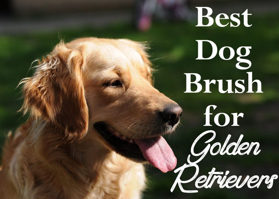 Goldenretrieversbestbrush