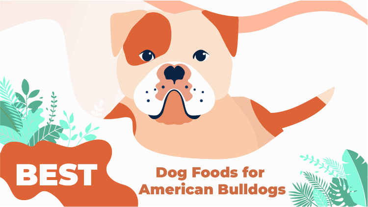 5 Best Dog Foods for American Bulldog 2019: Pup Junkies
