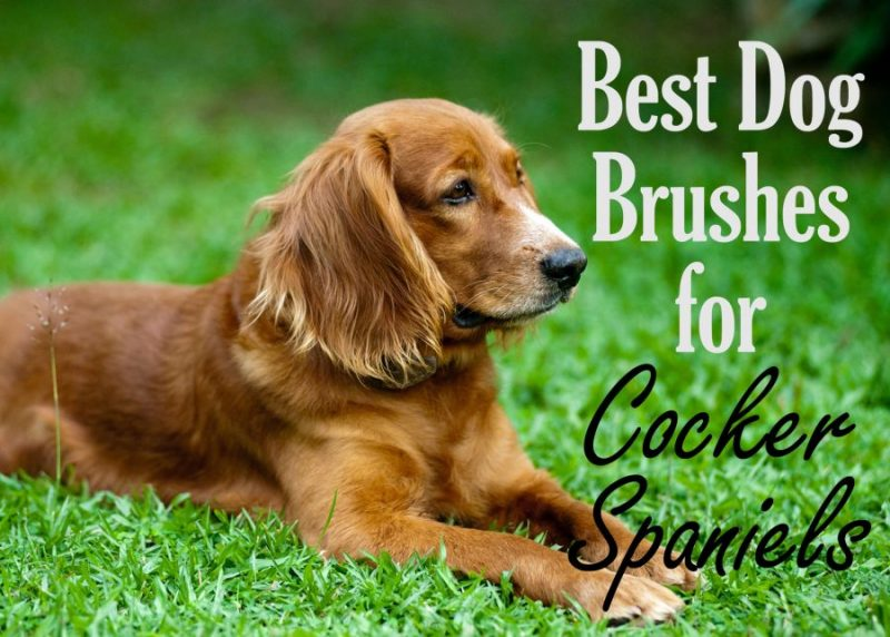5 Best Dog Brushes Deshedding Tools For Cocker Spaniels 2020 Pup Junkies