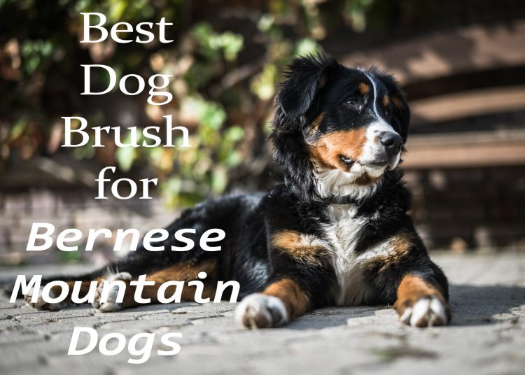 Best Dog Brush for Bernese Mountain Dogs