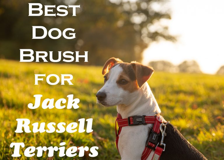 Best Dog Brush for Jack Russell Terriers
