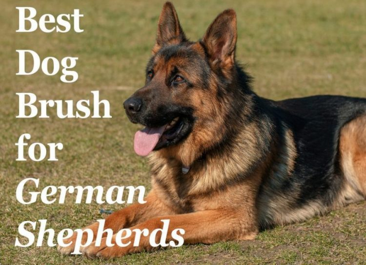 GermanShepherdBrush