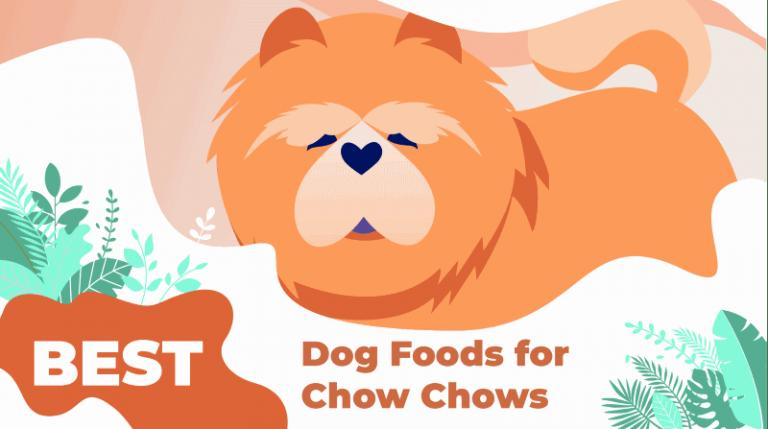 chow-chow-food