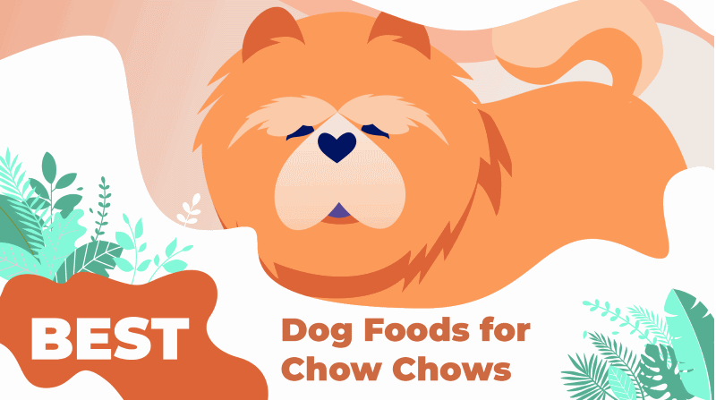 Best Dog Food for Chow Chow 2019: Puppies to Seniors