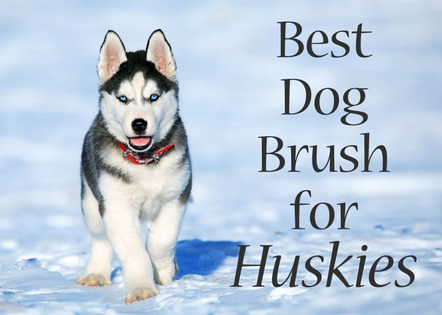 dogbrushhuskies