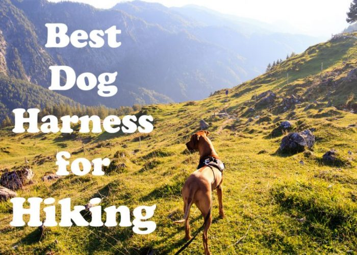 Best Dog Harness For Hiking 2019 - Pup Junkies