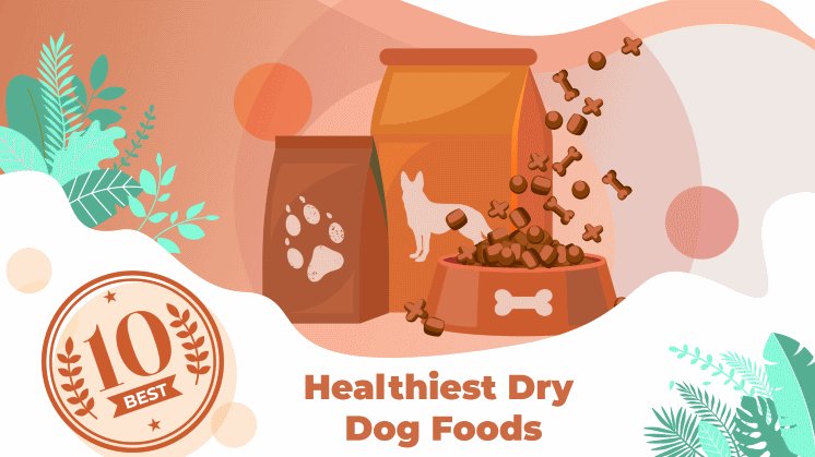 Best Healthiest Dry Dog Foods