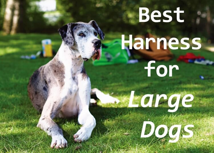 Best Big Dogs >> Best Harness For Large Dogs 2019 Pup Junkies