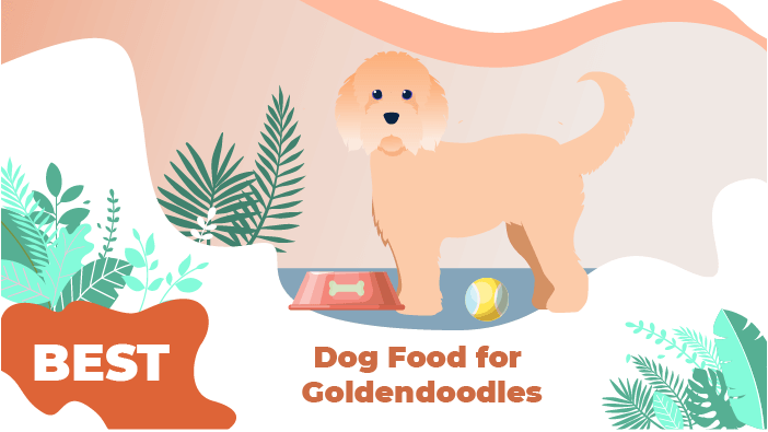 goldendoodles food