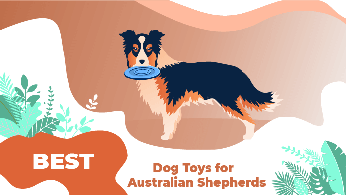 Best Dog Toys for Australian Shepherds