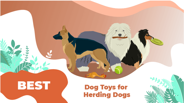 Best Dog Toys for Herding Dogs