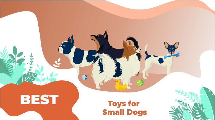 best toys small dog