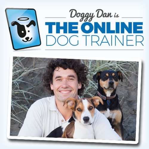 Doggy Dan Online Trainer Program Review
