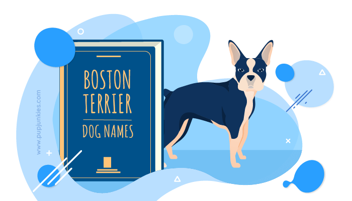 Boston Terriers Dog Names