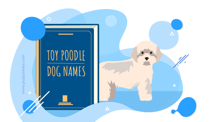 Male And Female Dog Names For Toy Poodle 2020