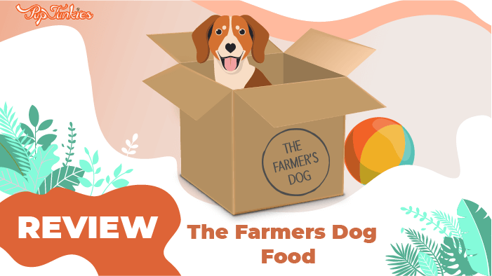 farmers dog review
