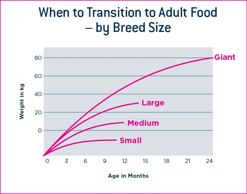 When to transition to adult dog food