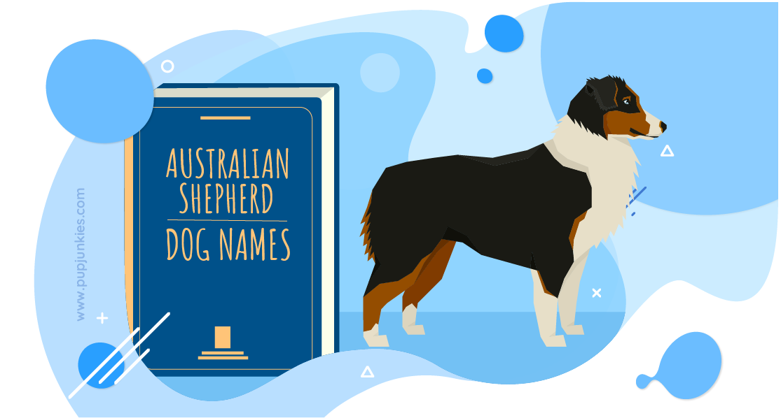 Australian Shepherd Dog Names