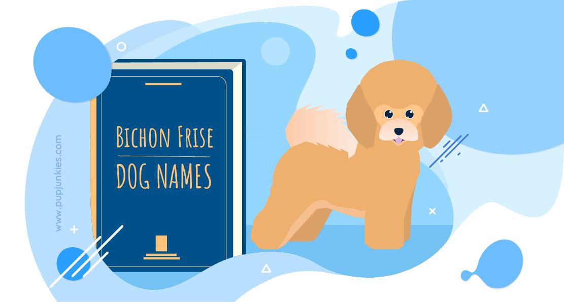 Bichon Frise Dog Names