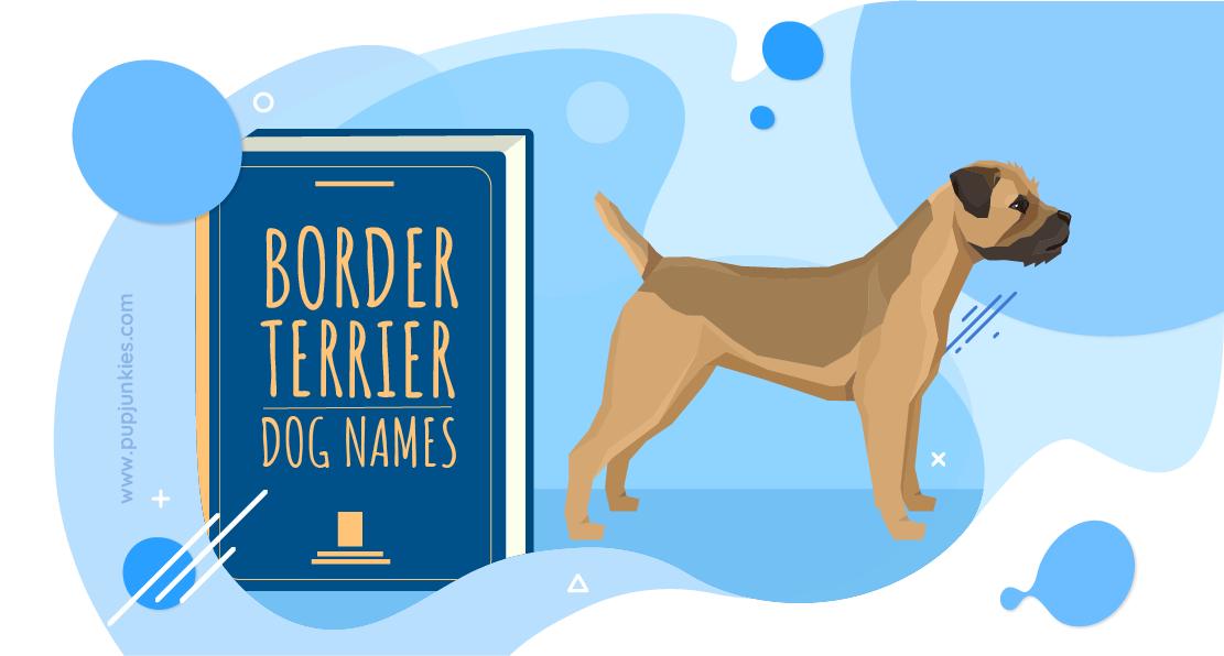 100 Most Popular Border Terrier Dog Names Of 2020