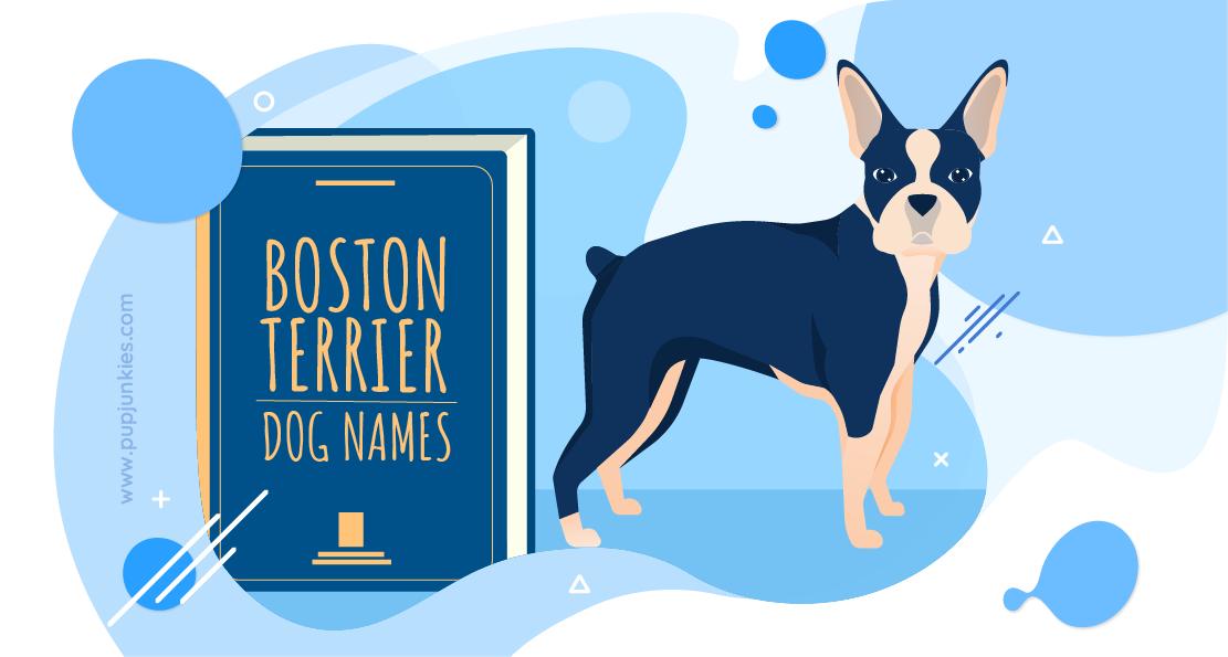 Boston Terrier Dog Names