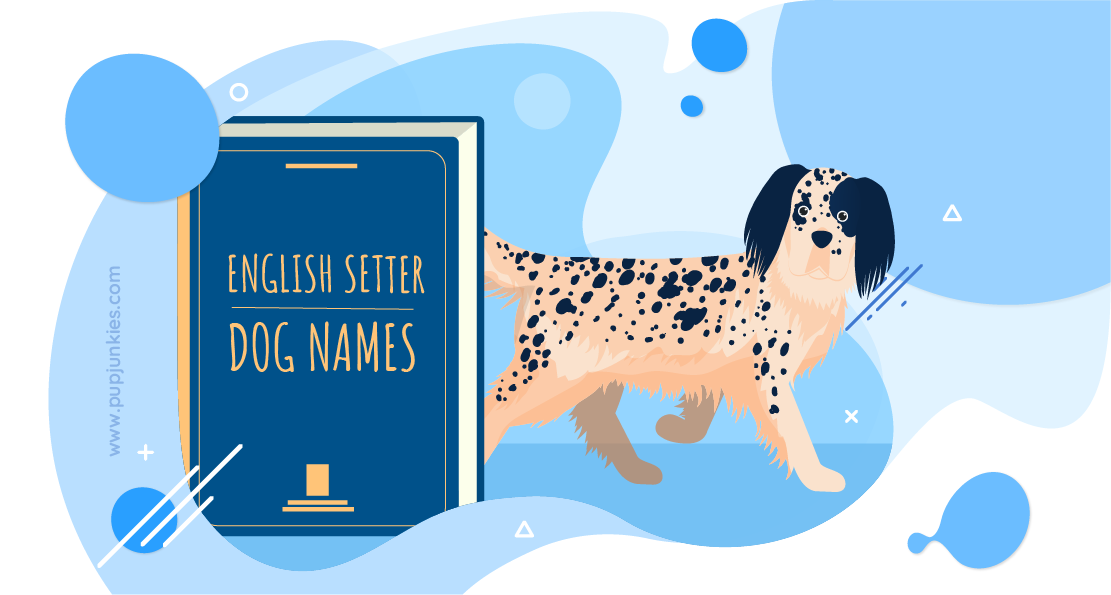 English Setter Dog Names