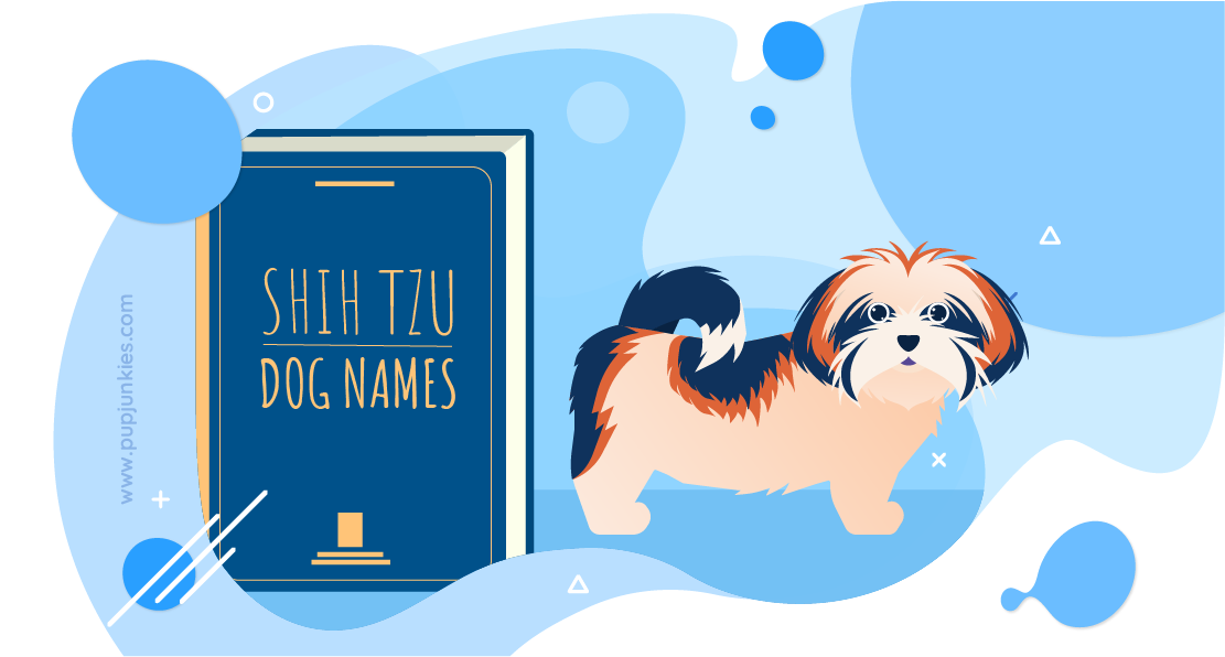 100 Most Popular Shih Tzu Dog Names Of 2020