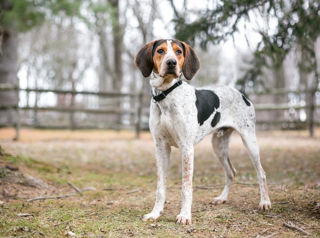 best coonhound dog names for an intelligent hunter
