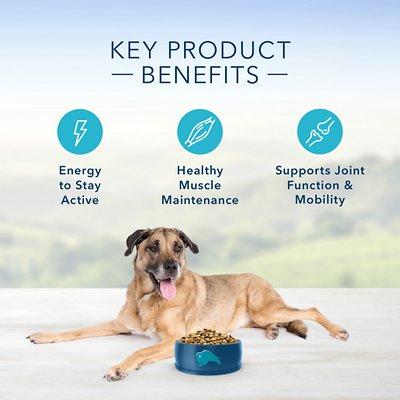 Blue Buffalo Life Protection Formula Senior Recipe